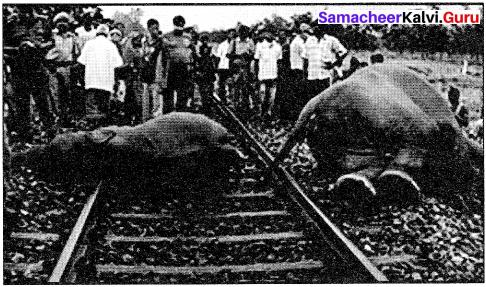 Samacheer Kalvi 10th English Picture Composition Interpretation 2