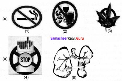 Samacheerkalvi.Guru Science 10th Chapter 21