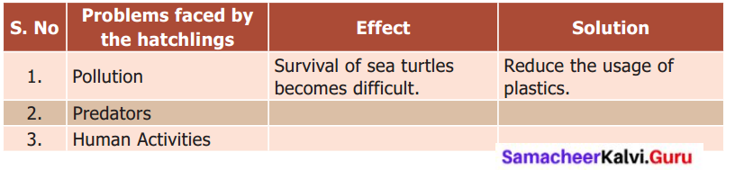 Samacheer Kalvi 6th English Solutions Term 1 Prose Chapter 1 Sea Turtles 1