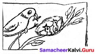 Samacheer Kalvi 6th English Solutions Term 1 Prose Chapter 1 Sea Turtles 18