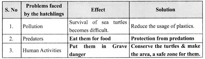 Samacheer Kalvi 6th English Solutions Term 1 Prose Chapter 1 Sea Turtles 2