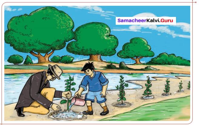 When The Trees Walked Summary Samacheer Kalvi 6th English
