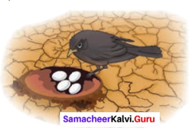 Samacheer Kalvi 6th English Solutions Term 3 Prose Chapter 1 Who Owns the Water 1