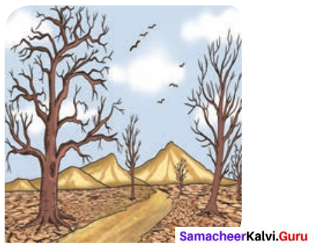 Samacheer Kalvi 6th English Solutions Term 3 Prose Chapter 1 Who Owns the Water 8