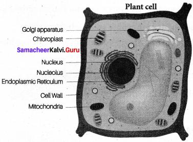 Science Cell Biology Samacheer Kalvi