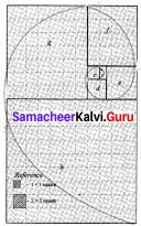 Samacheer Kalvi 8th Maths Solutions Term 2 Chapter 4 Information Processing Ex 4.1 3