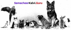 The Cat And The Painkiller Summary Samacheer Kalvi 9th English