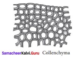 Organisation Of Tissues Class 9 Samacheer Kalvi Science Solutions