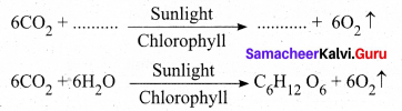 Chapter 19 Plant Physiology Samacheer Kalvi Science Solutions