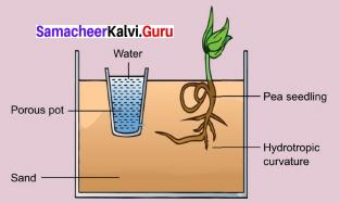 9th Plant Physiology Book Back Answers Samacheer Kalvi