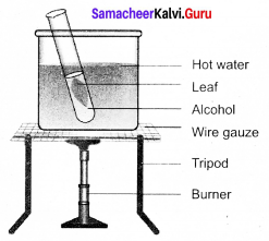 Samacheer Kalvi 9th Science Solutions Chapter 19 Plant Physiology 5