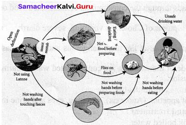 Health And Hygiene 7th Standard Samacheer Kalvi