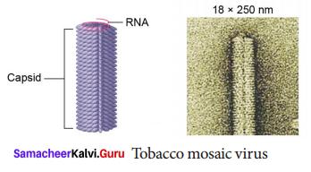 World Of Microbes Class 9 Samacheer Kalvi