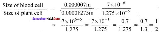 Samacheer Kalvi 8th Maths Solutions Term 3 Chapter 1 add 7