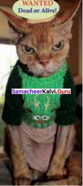 11th Poem Macavity The Mystery Cat Samacheer Kalvi Chapter 4