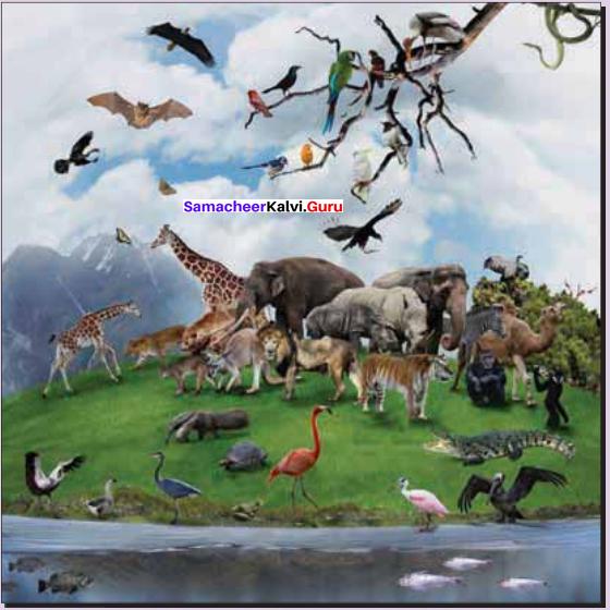 Samacheer Kalvi Guru 11th Zoology Chapter 1