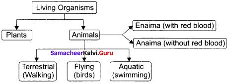 11th Zoology 1st Chapter Samacheer Kalvi Chapter 1