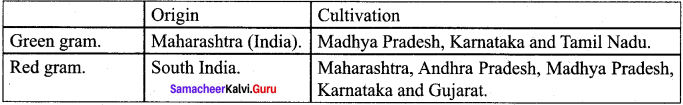 Samacheer Kalvi 12th Bio Botany Solutions Chapter 10 Economically Useful Plants and Entrepreneurial Botany