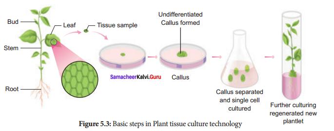 12th Botany 5th Lesson Book Back Answers Samacheer Kalvi