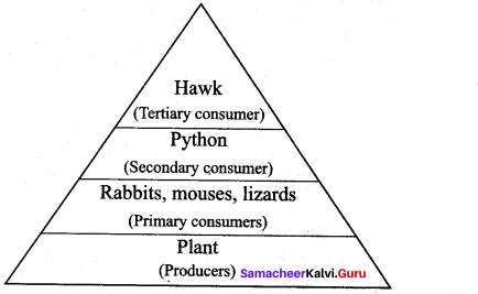 Samacheer Kalvi 12th Bio Botany Solutions Chapter 7 Ecosystem