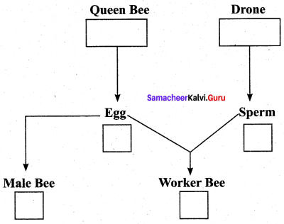 12th Zoology Chapter 1 Book Back Answers Samacheer Kalvi
