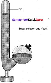 Tamil Nadu 11th Biology Model Question Paper 1 English Medium - 4