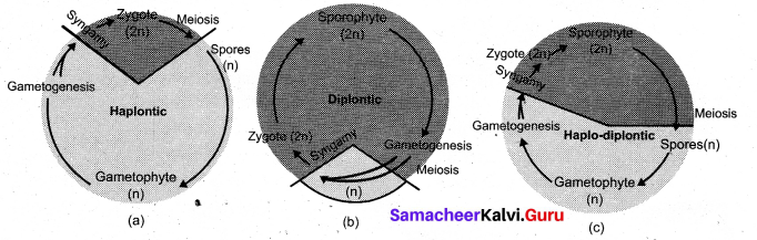 Tamil Nadu 11th Biology Model Question Paper 2 English Medium - 3