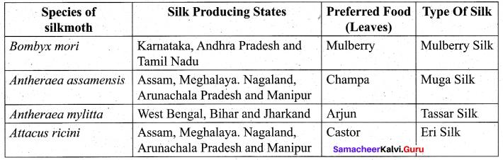 Tamil Nadu 11th Biology Model Question Paper 3 English Medium - 10