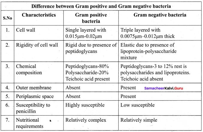 Tamil Nadu 11th Biology Model Question Paper 3 English Medium - 3