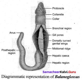 Tamil Nadu 11th Biology Model Question Paper 3 English Medium - 8