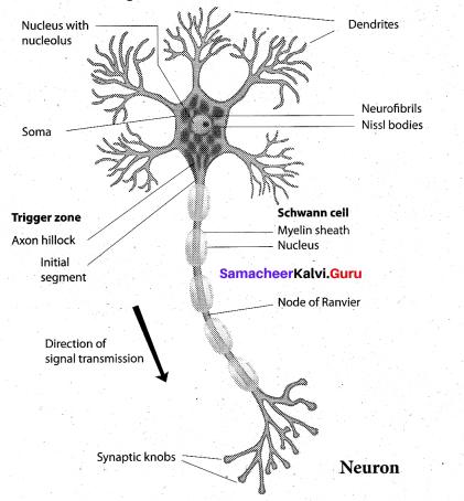 Tamil Nadu 11th Biology Model Question Paper 3 English Medium - 9