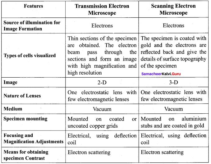 Tamil Nadu 11th Biology Model Question Paper 4 English Medium - 2