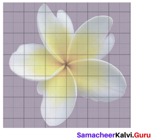 Samacheer Kalvi 6th Maths Solutions Term 3 Chapter 3 Perimeter and Area Ex 3.2 5