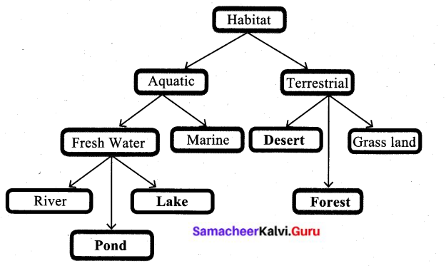 Samacheer Kalvi 6th Science Solutions Term 1 Chapter 4 The Living World of Plants 4