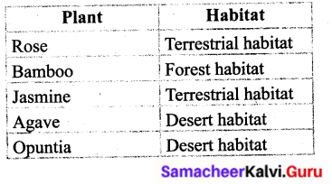Samacheer Kalvi 6th Science Solutions Term 1 Chapter 4 The Living World of Plants 7
