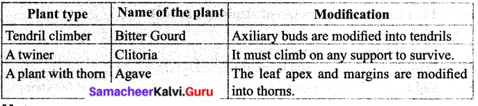 Samacheer Kalvi 6th Science Solutions Term 1 Chapter 4 The Living World of Plants 8