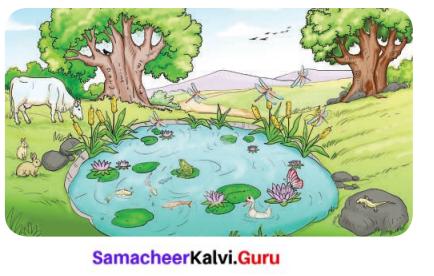 Samacheer Kalvi Guru 6th Science Ch 1