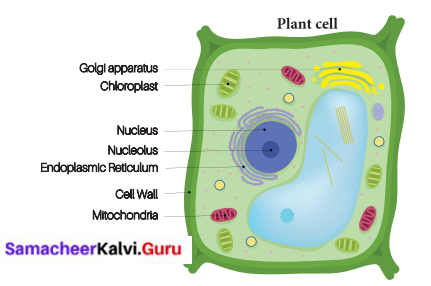Kalvi Guru 6th Science Samacheer Kalvi Chapter 5 The Cell
