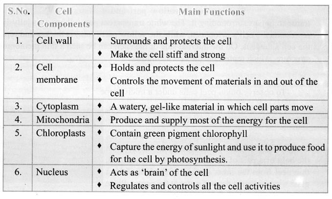 Science Term 2 Samacheer Kalvi Chapter 5 The Cell