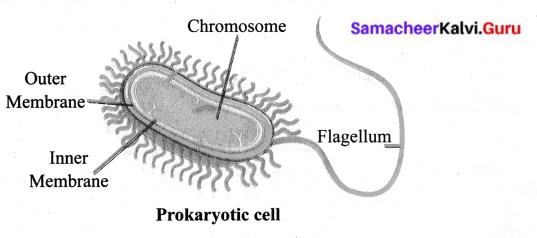Samacheer Kalvi.Guru 6th Science Chapter 5 The Cell