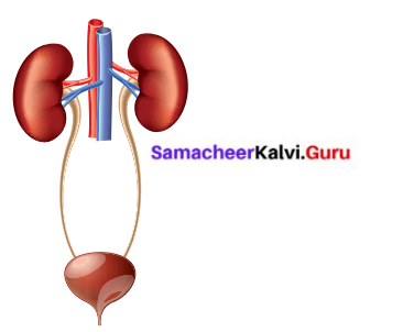 Samacheer Kalvi 6th Science Solutions Term 2 Chapter 6 Human Organ Systems 1