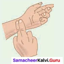 Samacheer Kalvi 6th Science Solutions Term 2 Chapter 6 Human Organ Systems 4