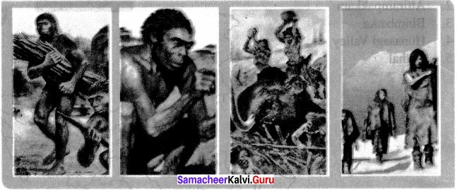 Human Evolution 6th Standard Samacheer Kalvi
