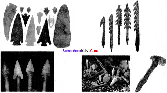 Samacheer Kalvi 6th Social Science History Solutions Term 1 Chapter 1 What is History image - 1