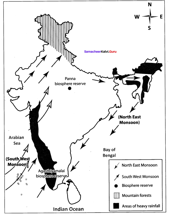 Samacheer Kalvi 10th Social Science Geography Solutions Chapter 2 Climate and Natural Vegetation of India 91