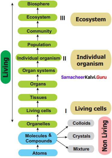 Samacheer Kalvi 11th Bio Botany Solutions Chapter 1 Living World 13