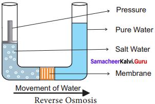 Samacheer Kalvi 11th Bio Botany Solutions Chapter 11 Transport in Plants 5