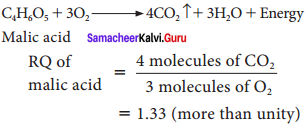 Samacheer Kalvi 11th Bio Botany Solutions Chapter 14 Respiration 11