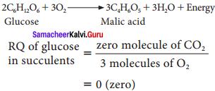 Samacheer Kalvi 11th Bio Botany Solutions Chapter 14 Respiration 9