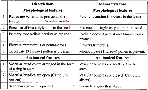 Samacheer Kalvi 11th Bio Botany Solutions Chapter 2 Plant Kingdom 14